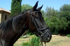 Tuscany horse riding holiday in Italy