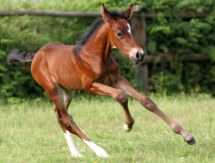 horse breeding in Tuscany Italy