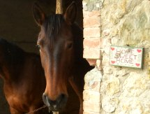 horse breeding in Italy Tuscany