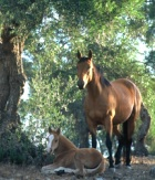 trekking horse riding in Tuscany Italy